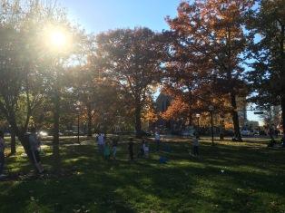 Trees and sunshine